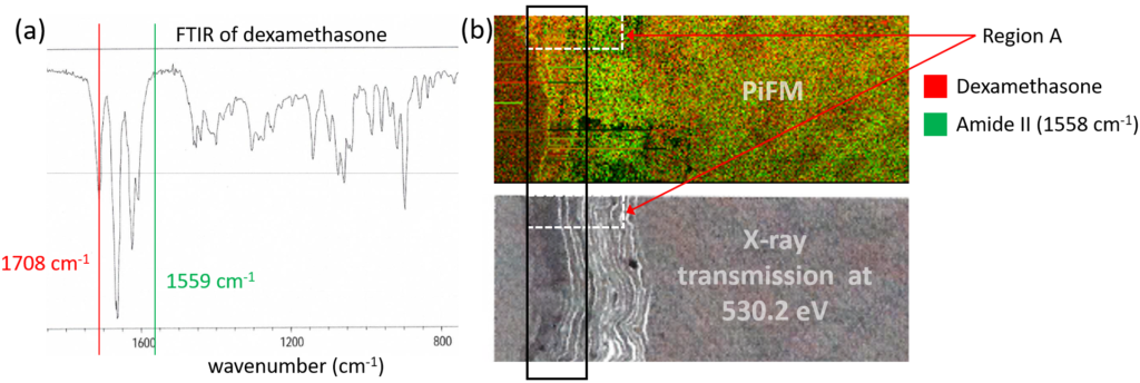 FTIR spectrum of dexamethasone; (b) combined PiFM images (top) acquired at 1708 1/cm for dexamethasone (red) and at 1558 1/cm for corneocytes (green) and X-ray transmission image of the same region.